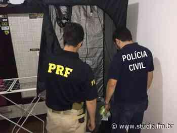 Policia Civil e Policia Rodoviaria Federal apreendem 'Super Maconha' em Bage   Rádio Studio 87.7 FM   Studio TV   Veranópolis   RS - Rádio Studio 87.7 FM