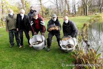 Motevissers zetten 500 kilo karpers uit (Koekelare) - Het Nieuwsblad