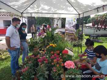 Tesalia: orquídeas, muestra artesanal y gastronómica • La Nación - La Nación.com.co