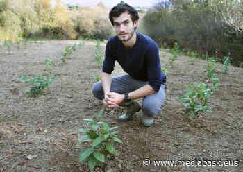 Première plantation de thé au Pays Basque, à Ustaritz - mediabask.eus