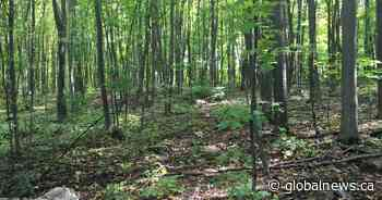 Pincourt town council votes in favour of protecting Rousseau Forest - Globalnews.ca