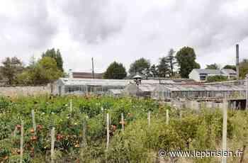 Jouy-en-Josas : des terres rendues à l'agriculture pour contrer un projet immobilier - Le Parisien