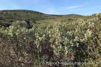 Hérault : l'atlas de la biodiversité des garrigues de Montbazin, Poussan et Villeveyrac - France 3 Régions