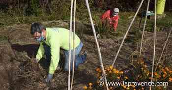 Ventabren : une nouvelle association pour pratiquer le jardinage - La Provence