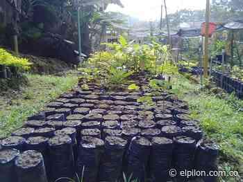 En Curumaní y La Gloria realizan cultivos forestales con fines de comercialización - ElPilón.com.co