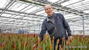 Issum: Gärtnerei Paß versorgt das Revier mit der beliebten Amaryllis - BILD