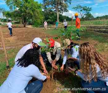 Mahates fue favorecido con siembra de nuevos árboles - El Universal - Colombia