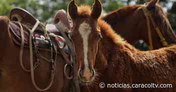 Dijo que transportaba comida para caballo, pero la Policía lo esculcó y descubrió la verdad - Noticias Caracol