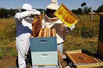 La Cooperativa de Trabajo Los Algarrobos impulsa la apicultura del monte nativo - La Nueva Mañana de Córdoba