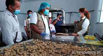 San Martín: inauguran módulo procesador de plátano y sus derivados en Uchiza LRND - LaRepública.pe