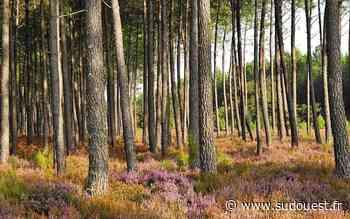 Les maires d'Audenge et du Teich ne veulent pas que l'ONF gère leurs forêts - Sud Ouest