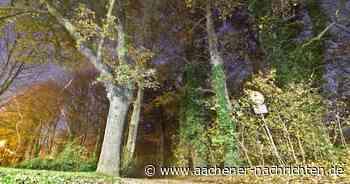 Klimawandel setzt Wald zu: Kein Platz für neue Bäume in Geilenkirchen? - Aachener Nachrichten