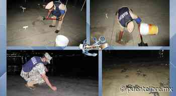 Anidó Marina más de 300 huevos y liberó 166 tortuguitas en Guerrero - Puente Libre La Noticia Digital