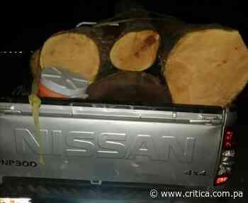 Decomisan 16 tucas de caoba en Macaracas - Crítica Panamá