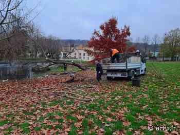 Mandatés pour retirer un arbre mort à Bures-sur-Yvette, des bûcherons découpent un saule emblématique - Actu Essonne