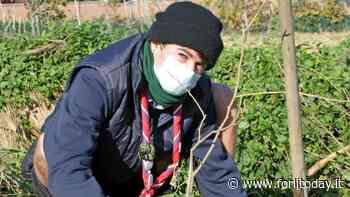Bertinoro, un regalo verde agli studenti: un albero per ogni bimbo - ForlìToday
