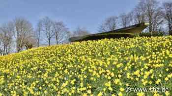 Fahrdorf: Blütenpracht auf dem Karberg   shz.de - shz.de