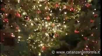 Pentone, arriva albero di Natale della legalità - CatanzaroInforma