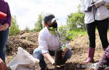 Plantación de 400 árboles en el humedal Capellanía - Alcaldía de Bogotá