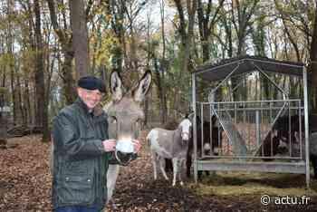 Seine-et-Marne. A Bois-le-Roi, douze ânes au service de la collectivité - actu.fr