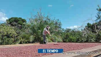 Cumaribo, el pueblo que les dijo adiós a cultivos de coca - ElTiempo.com