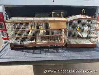 Polícia apreende pássaros silvestres em Joaquim Gomes - Alagoas 24 Horas