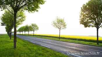 Essonne : 2.300 arbres plantés à Bretigny-sur-Orge - Les Échos