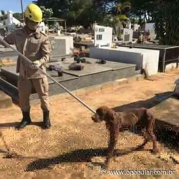 Cão é resgatado de túmulo em cemitério de Ipameri - O Popular