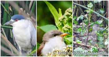 Capellanía, el humedal de Bogotá que más registró aves nuevas en cinco años - Semana