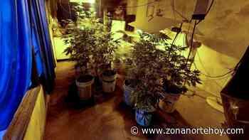 Secuestran 55 plantas de marihuana en un sótano en Los Polvorines donde funcionaba un invernadero - zonanortehoy.com