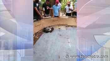 Desmantelan gallera clandestina en Gualaca - Telemetro