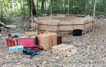 Desmantelan gallera clandestina en una finca privada en La Esperanza de Gualaca - Panamá América
