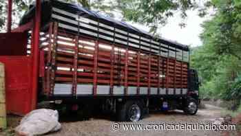 Camión con 66 cerdos, hurtado en Circasia, fue recuperado en Bugalagrande - La Cronica del Quindio