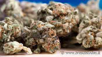 Svaligiato lo store della marijuana light: colpo da migliaia di euro - BresciaToday