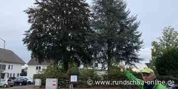 Neunkirchen-Seelscheid: Investor möchte Wohnraum - Poliker kämpfen um zwei Bäume - Kölnische Rundschau