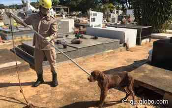 Cachorro é resgatado dentro de túmulo em cemitério de Ipameri - G1