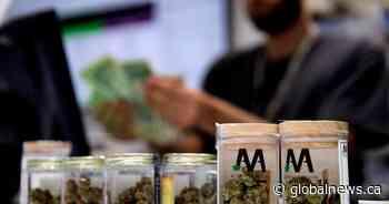 Police raid 5 'unlicensed' cannabis sellers in Cole Harbour, N.S. - Global News
