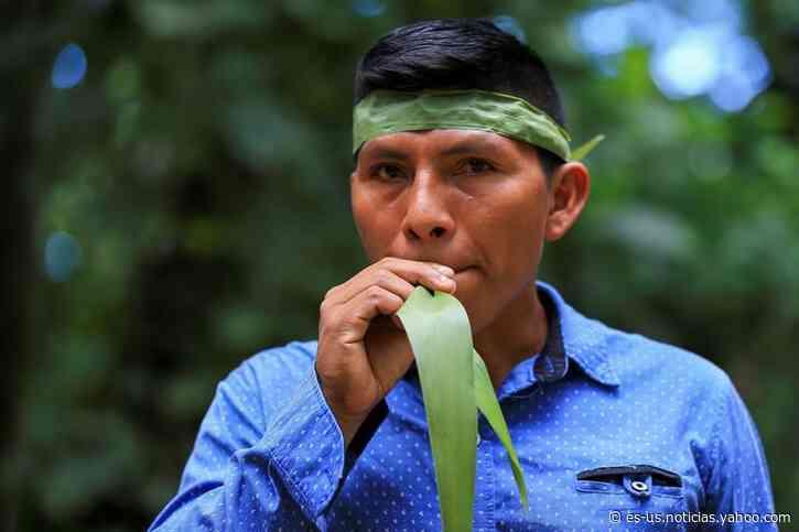 Ajo de monte, agua de bejuco y matico contra la covid-19 en Amazonía de Ecuador - Yahoo Noticias