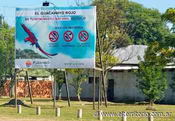 """Declararon al Guacamayo Rojo """"Monumento Natural Municipal"""" de Ituzaingó - EL TERRITORIO"""