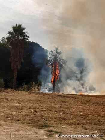 Rende, vasto incendio a Quattromiglia: in fiamme folta vegetazione - Cosenzachannel.it