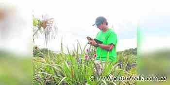 Mateo Fernández, el biólogo que redescubrió la Flor de Inírida - El Nuevo Dia (Colombia)