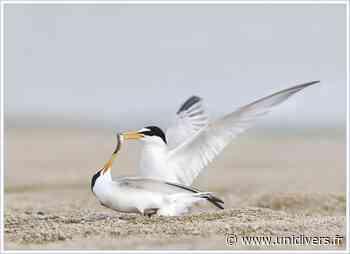 Sortie naturaliste accompagnée : Les ailes de l'hiver samedi 23 janvier 2021 - Unidivers