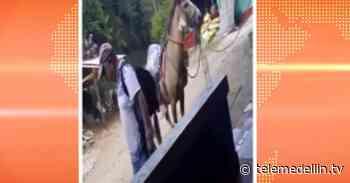 Policía rescata caballo golpeado por su dueño en Cocorná - Telemedellín