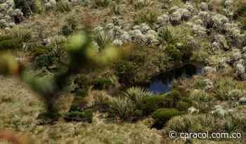Descubren dos plantas y una rana, nuevas especies en el Páramo de Pisba - Caracol Radio
