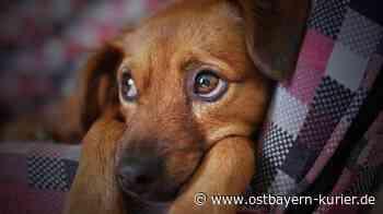 Teunz: Hund frisst Giftköder - Ostbayern Kurier