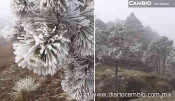 La nieve viste de blanco a Zacatlan - Diario Cambio