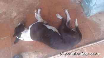 Cão vítima de maus tratos é resgatado em Iturama após denúncias - Pontal Emfoco