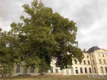 Val-d'Oise. Osny. Le tilleul de Grouchy sera préservé - La Gazette du Val d'Oise - L'Echo Régional