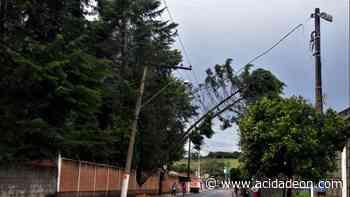 Chuva derruba pinheiro sobre fios em Monte Alegre do Sul - ACidade ON