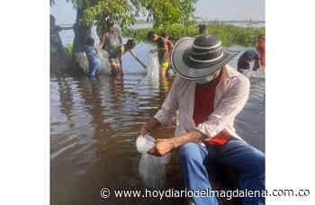 Sembrados 240 mil alevinos de bocachico en Guamal - Hoy Diario del Magdalena